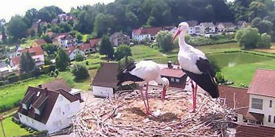 Röttenbacher Webcams